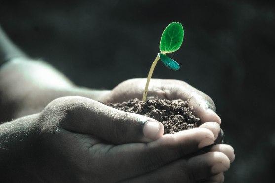 handwithplant